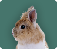 Products for Rabbits and Guinea Pigs